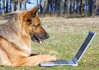 Contact Emma Boyd - enquiry form image of dog with laptop