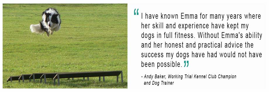 Header image of field trial dog with client testimonial for canine osteopathy with Emma Boyd