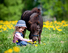 Child and shetland pony in prices box for Emma Boyd equine specialist treatments